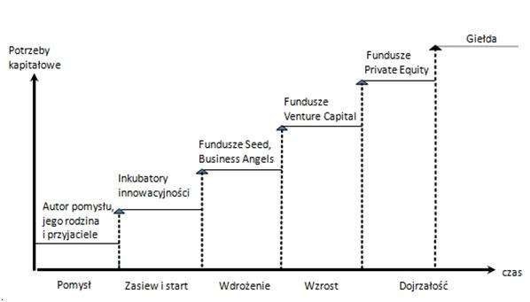 Fazy_rozwoju