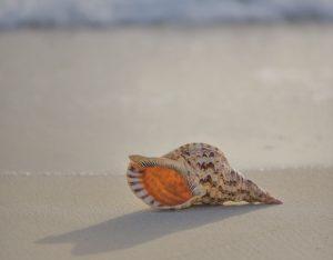 muszla na plazy